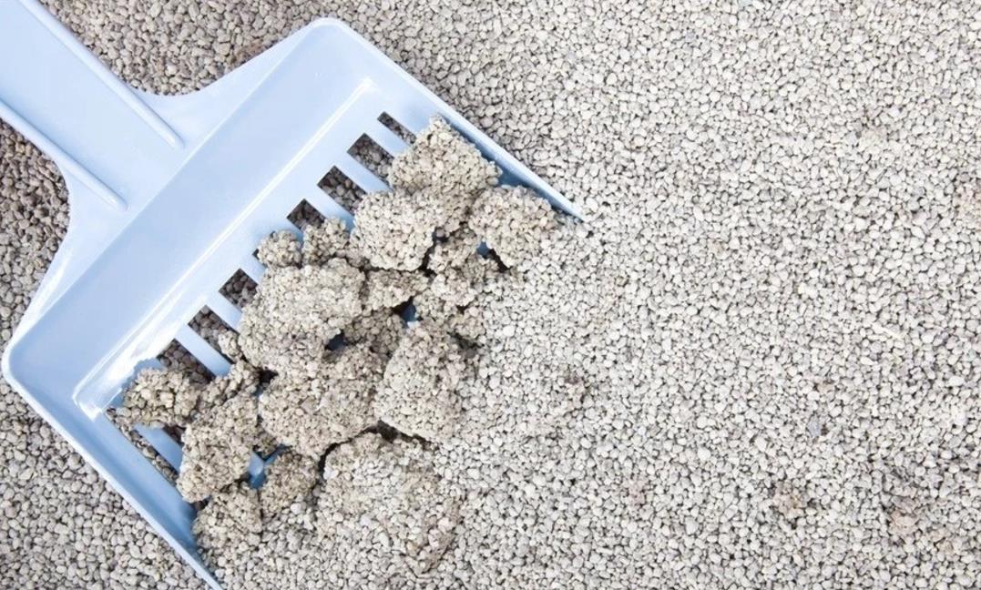 Tips memilih pasir untukkucing