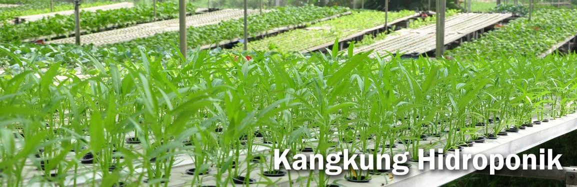 Analisa Bisnis Kangkung Hidroponik untuk Ibu RumahTangga