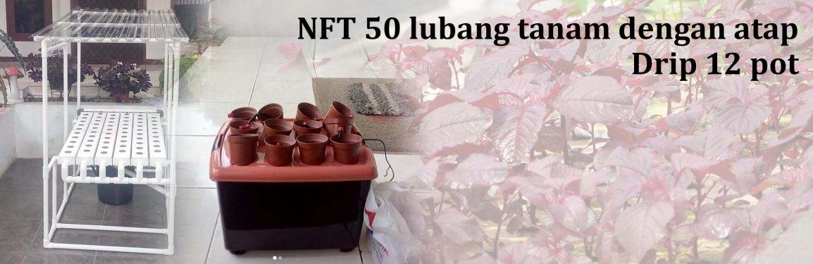 Pengiriman Hidroponik NFT dan Drip sistem, 16 November2018